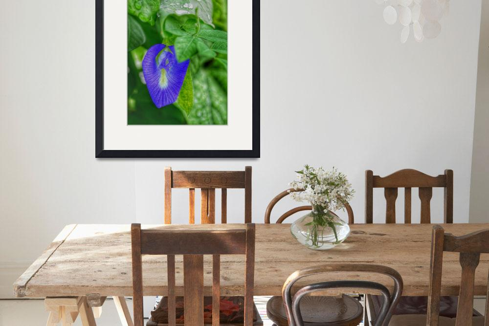 """""""Blue Wild Pea Flower and Green Leaves with Water D&quot  (2017) by nawfalnur"""