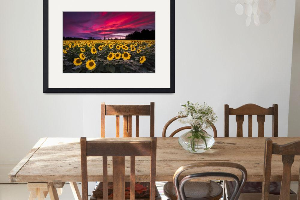 """Sunflower Field Sunset by Cody York_N2Q2472&quot  by cyorkphoto"