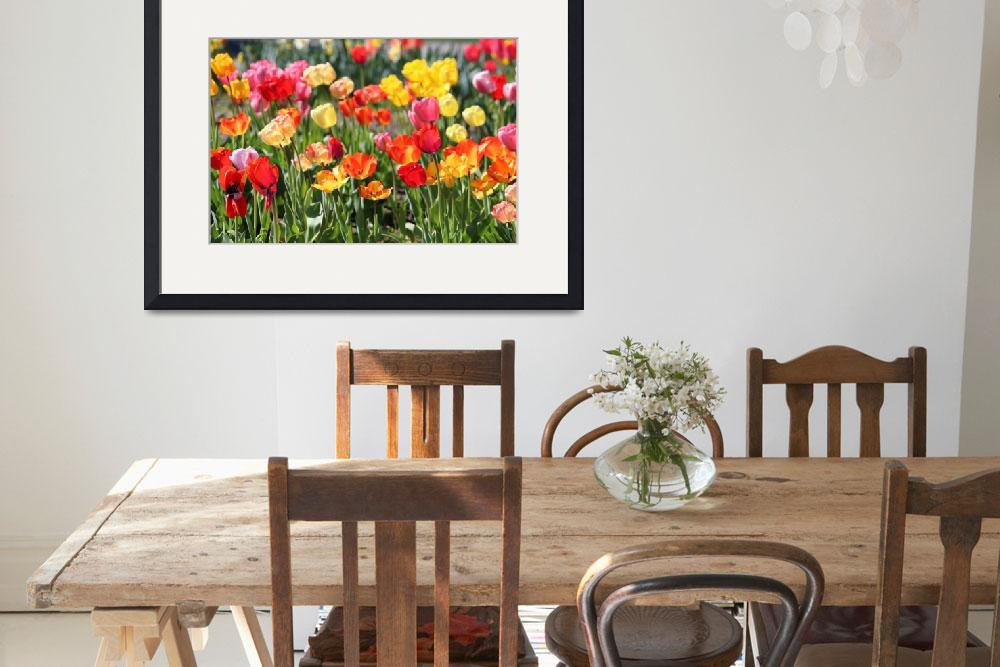 """""""Many Colors Tulips""""  (2017) by Groecar"""