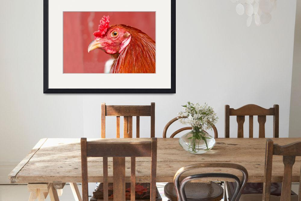 """""""Rooster Close-Up on Red""""  (2011) by lightningman"""