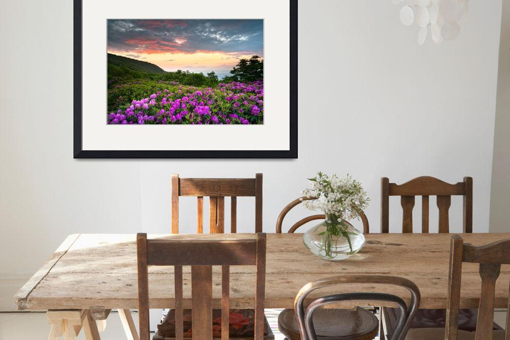 """Craggy Gardens Bloom - Rhododendron at Sunset&quot  (2011) by DAPhoto"