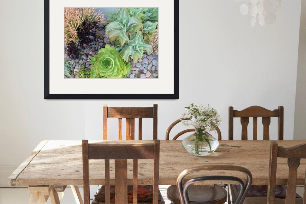 """""""Channel Islands Harbor Cactus Garden&quot  by seewater"""