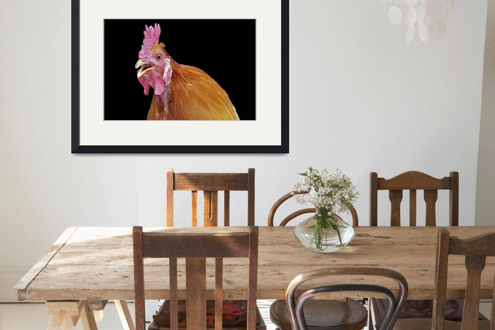 """""""Crowing Rooster on Black&quot  (2011) by LauraM"""