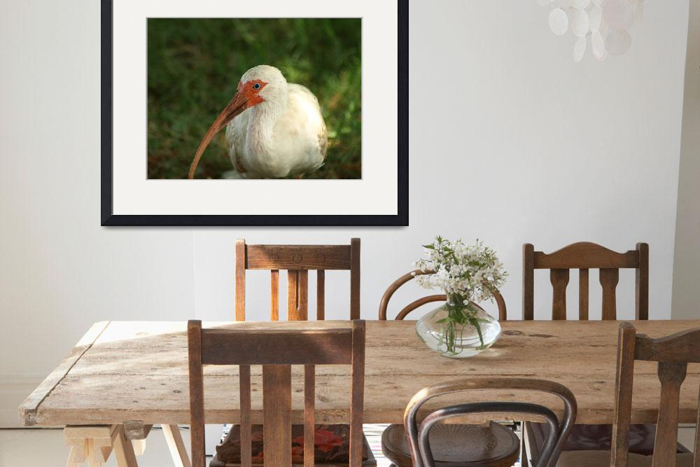 """""""White Ibis&quot  by EMNPhotography"""