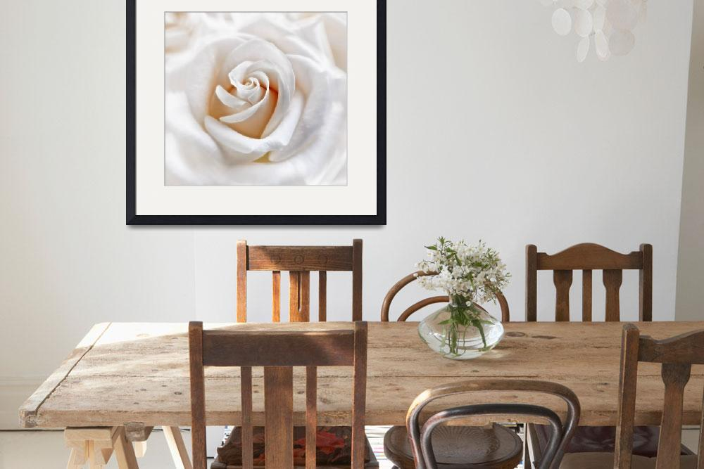 """""""Apricot White Rose&quot  (2011) by CoraNiele"""