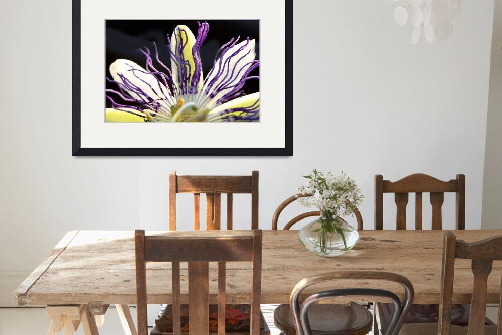 """""""Passion flower&quot  (2012) by MarinaPhotography"""