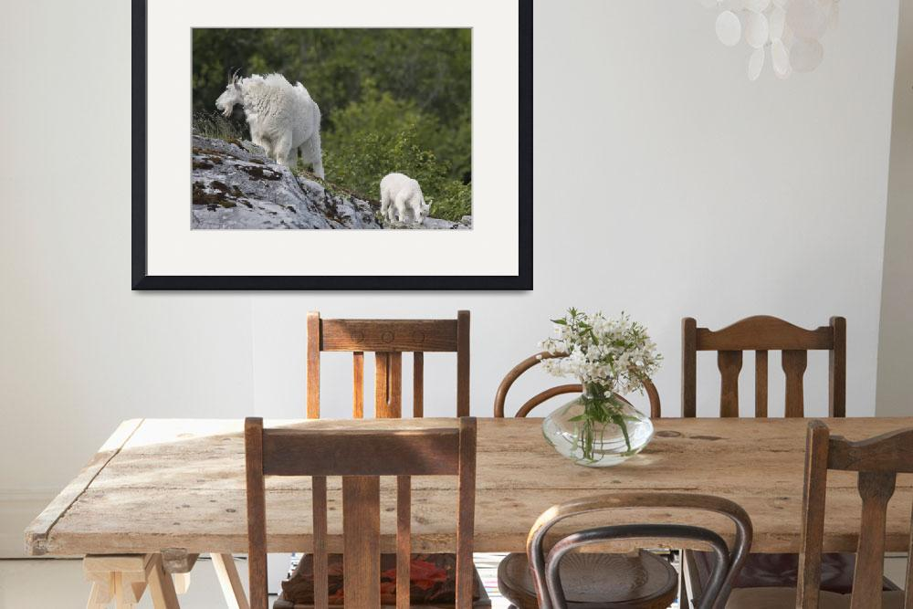 """""""Mountain Goat and Kid, Glacier Bay National Park,&quot  (2018) by SederquistPhotography"""
