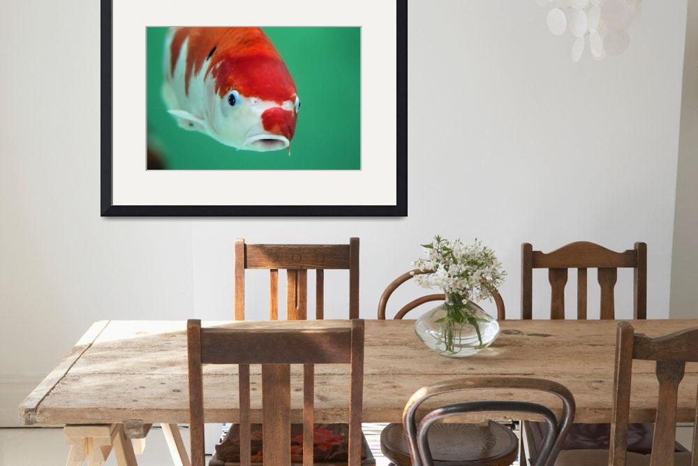 """""""koi carp&quot  (2013) by martynb1"""