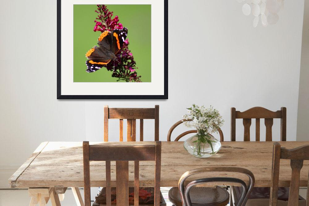 """Red Admiral Butterfly Square 2015&quot  (2015) by KsWorldArt"