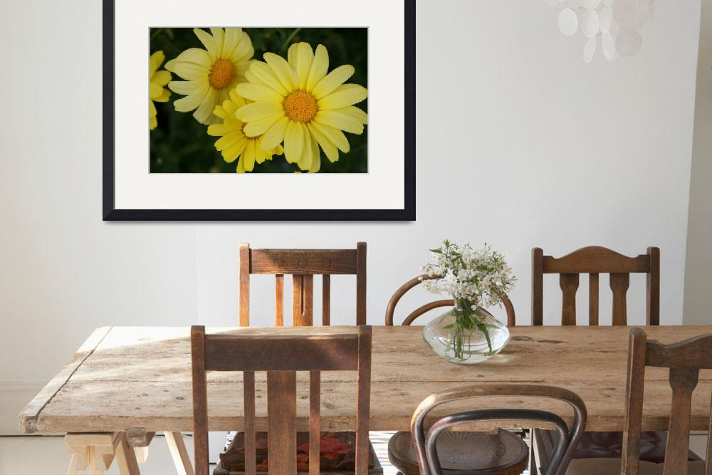 """""""Yellow Dasies&quot  by SEEtography"""