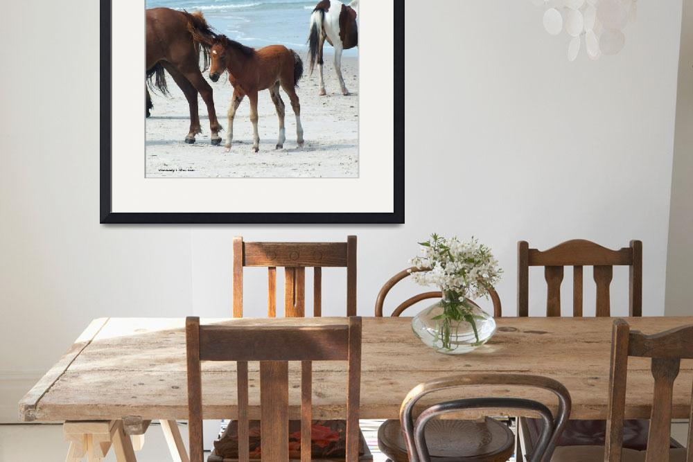 """""""Assateague Baby""""  (2015) by Kimmary"""