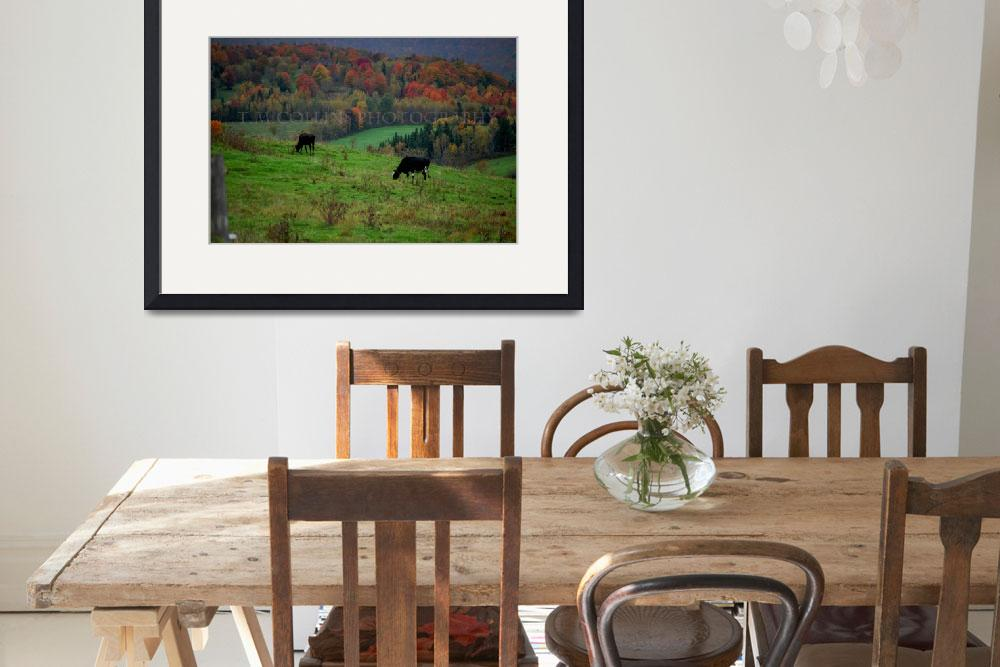 """""""Vermont cows in waiting&quot  by TMCollins"""