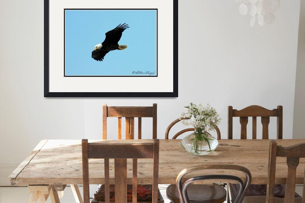 """""""Eagle in Flight 2""""  (2010) by BABowenphotography"""