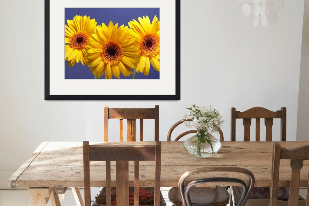 """Yellow Gerbera Daisies Buddy On Blue""  by Infomages"