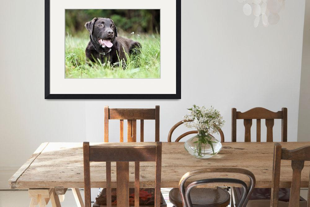 """""""Chocolate Labrador Relaxing in Lush Grassland&quot  (2010) by jmpaget"""