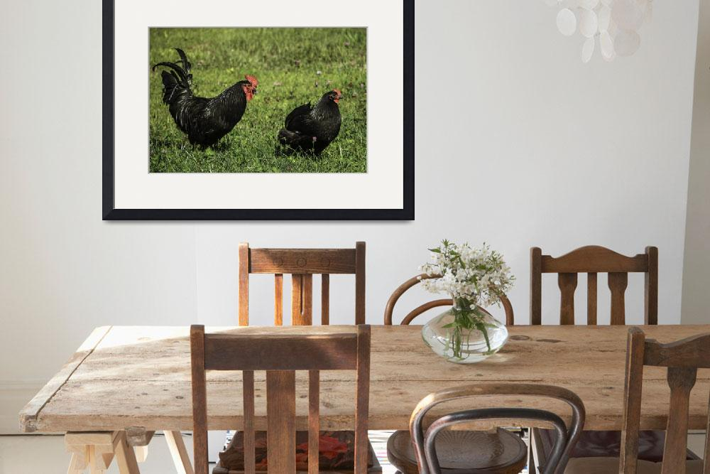 """Black Australorp Hen and Rooster&quot  (2016) by jwhitcomb"
