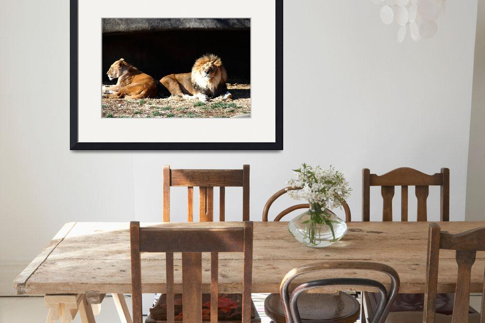 """""""African Lions 20150117_362a""""  (2015) by Natureexploration"""