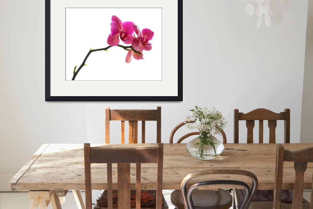 """""""Orchid&quot  (2008) by Lorenzo_Salas"""