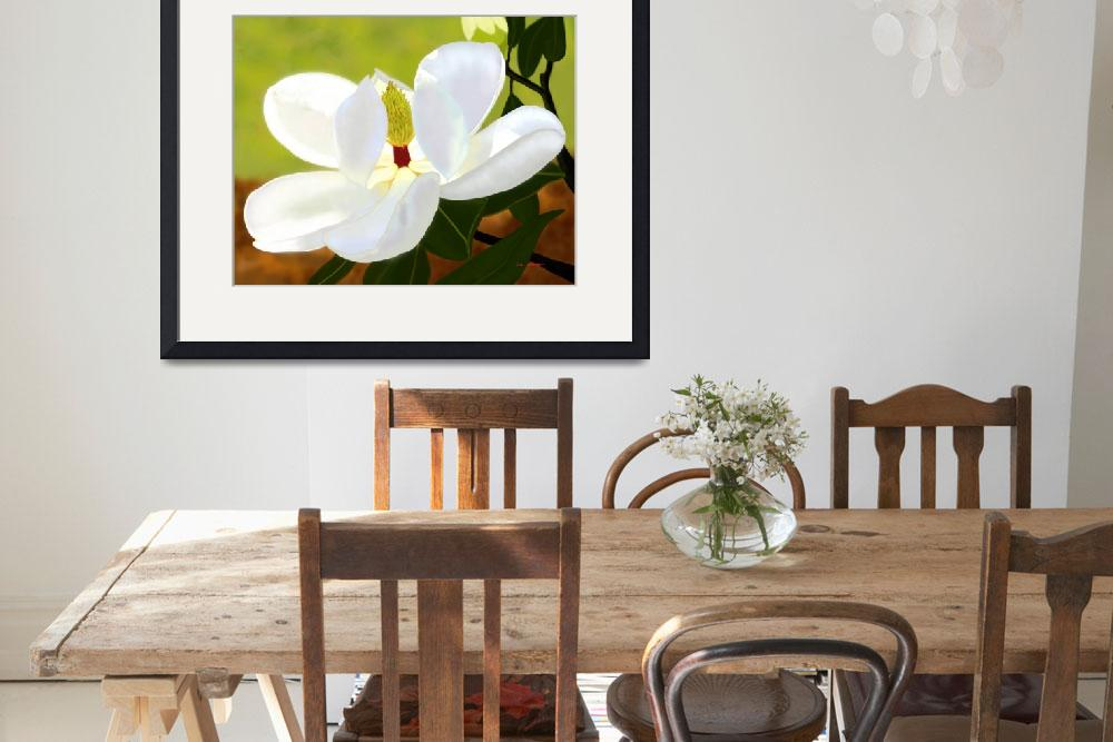 """""""Magnolia""""  (2006) by TimStringer"""