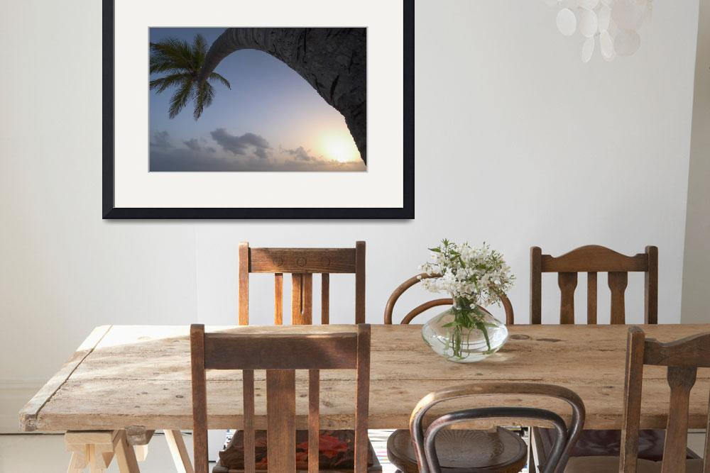 """""""Curved Palm Tree At Sunset Dominican Republic""""  by DesignPics"""