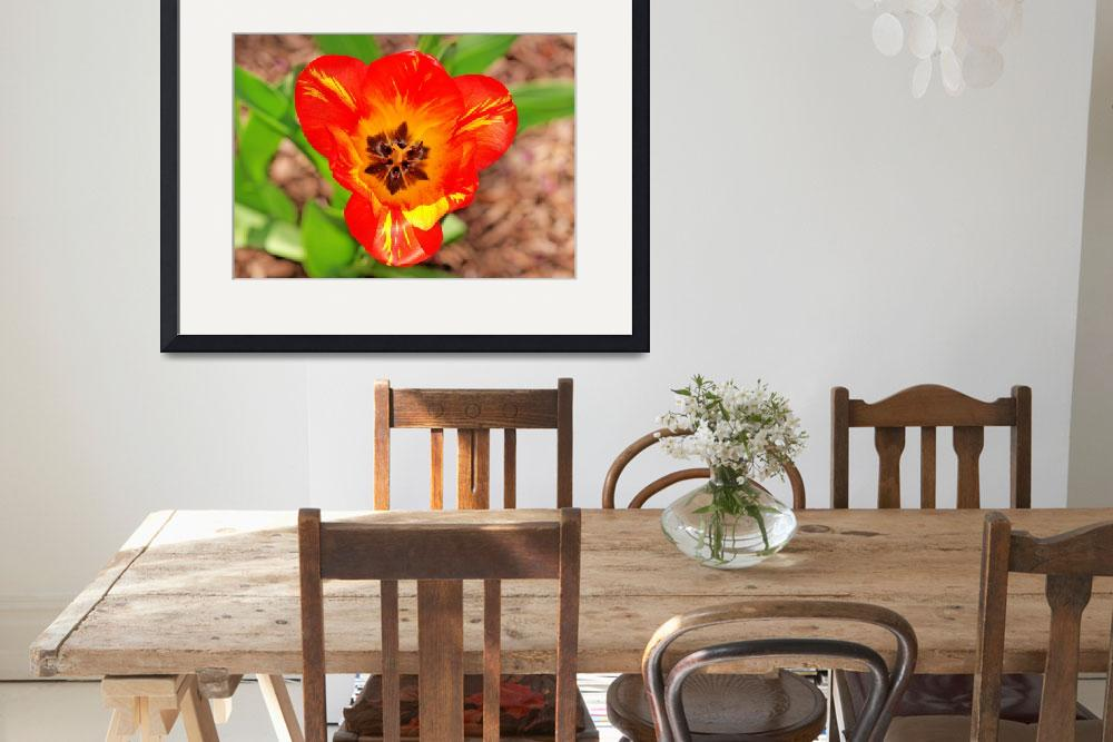 """""""Orange Tulip&quot  (2010) by feagans_photography"""
