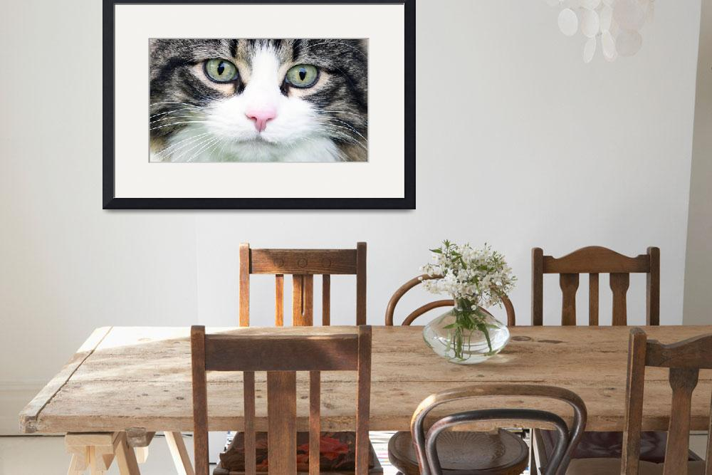 """Expressive Maine Coon Photo D122016&quot  (2016) by MasArtStudio"