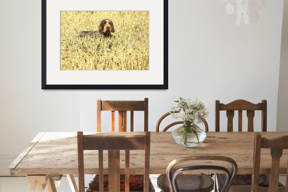 """""""Dog in the Cornfield&quot  (2007) by loversdream"""