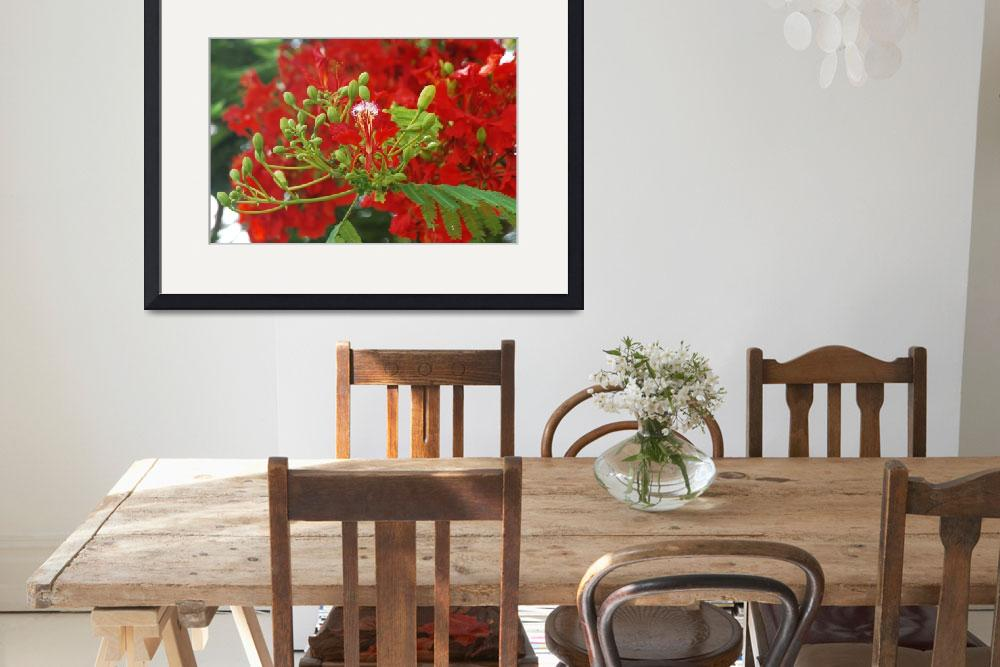 """""""Flamboyant, Royal poinciana, Mohur tree&quot  by Red_Label"""