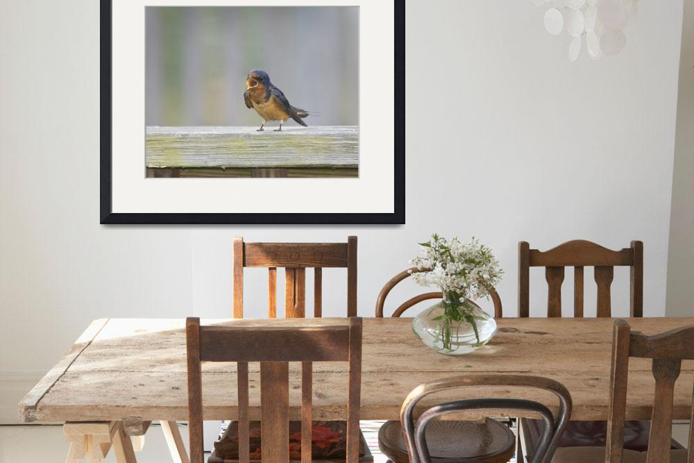 """""""Barn Swallow Chattering Loudly&quot  by birds2flight"""