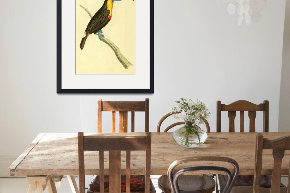 """Sharp billed Toucan - PD Image&quot  by DelCalsione"