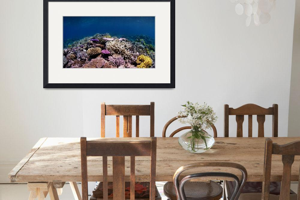 """""""Coral Reef&quot  by howardwesleyhall"""