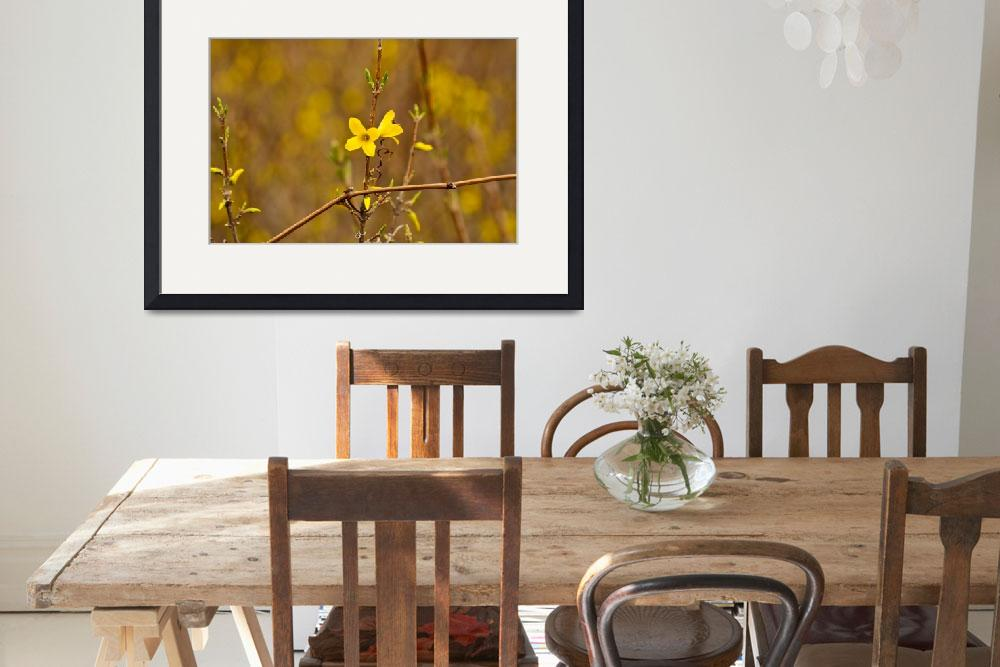 """Forsythia delight&quot  (2011) by julieandel"