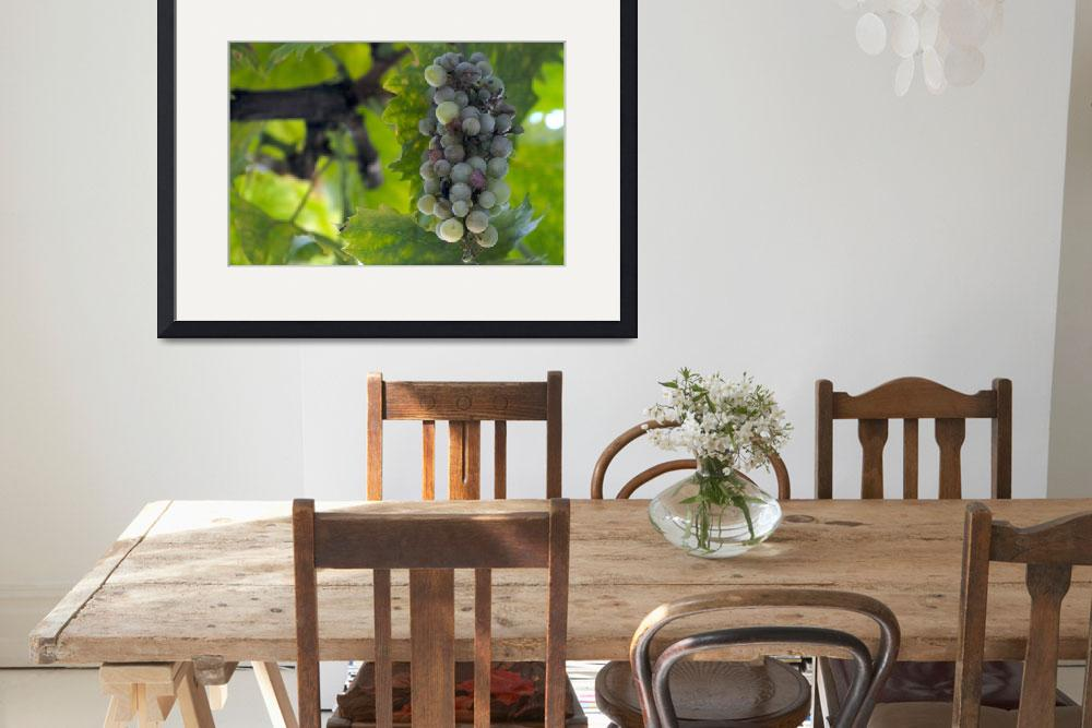 """""""Theophileon grapes, two.&quot  by trevino"""