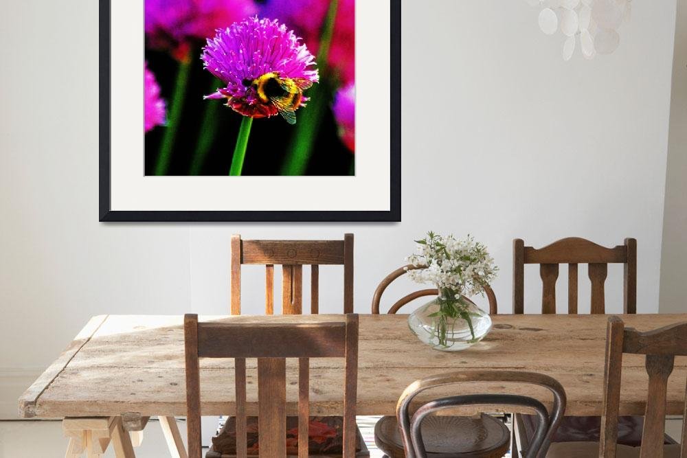"""""""Honey Bee on chives&quot  (2010) by Paul_Rumsey"""
