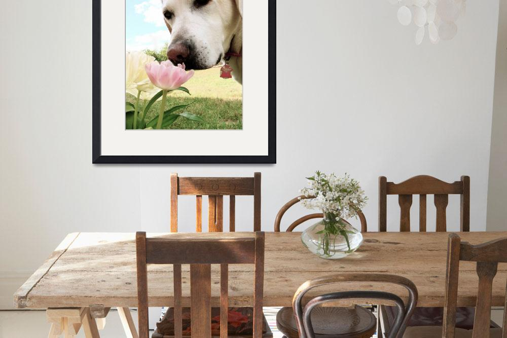 """""""Labrador and Tulip""""  (2009) by AmandaGrace"""