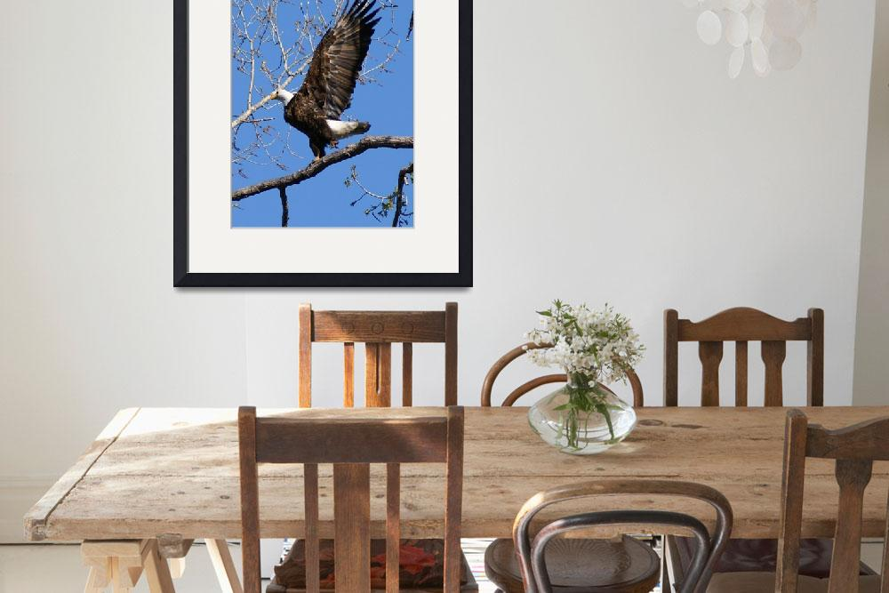 """""""Bald Eagle&quot  (2010) by cameragal"""