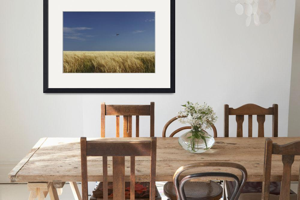 """""""A Swallow Flying Low Over A Barley Field In East C&quot  by DesignPics"""