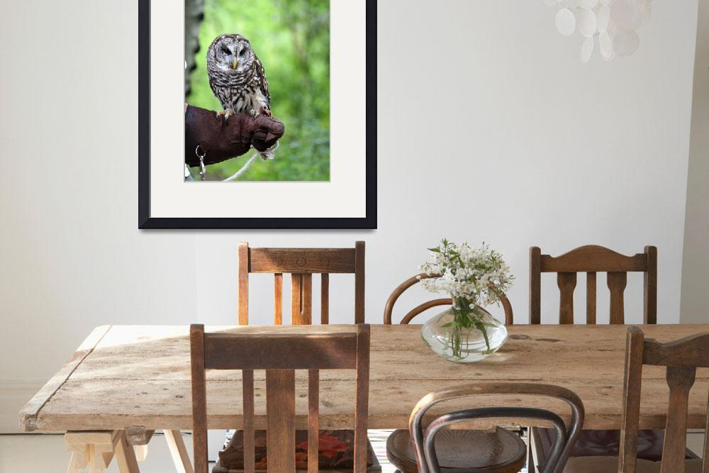 """""""Barred Owl&quot  by dbvirago"""