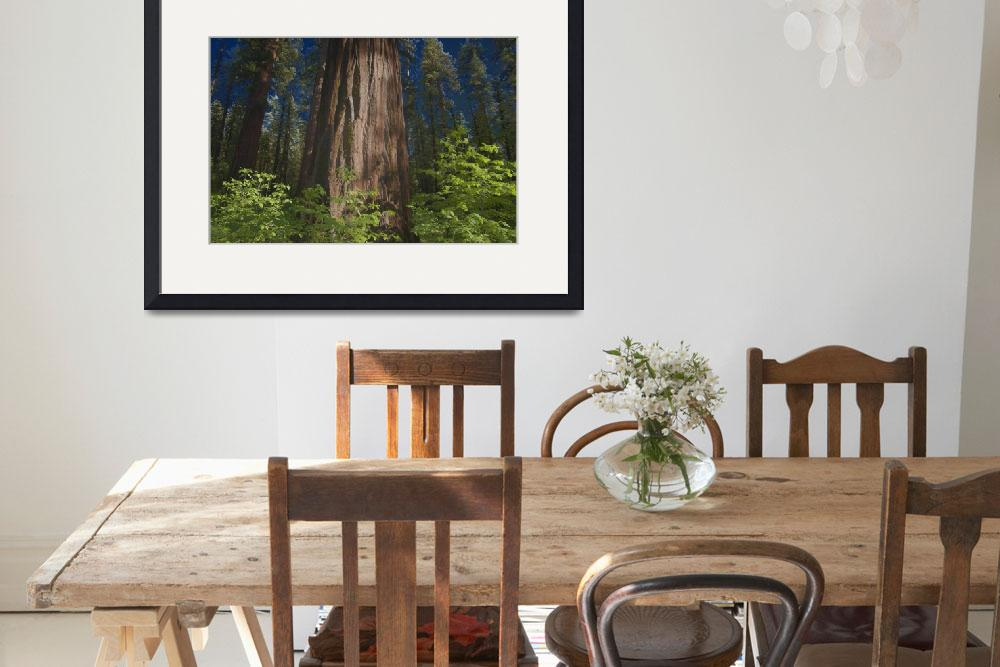"""""""Sequoia Special Effect II&quot  (2007) by SederquistPhotography"""