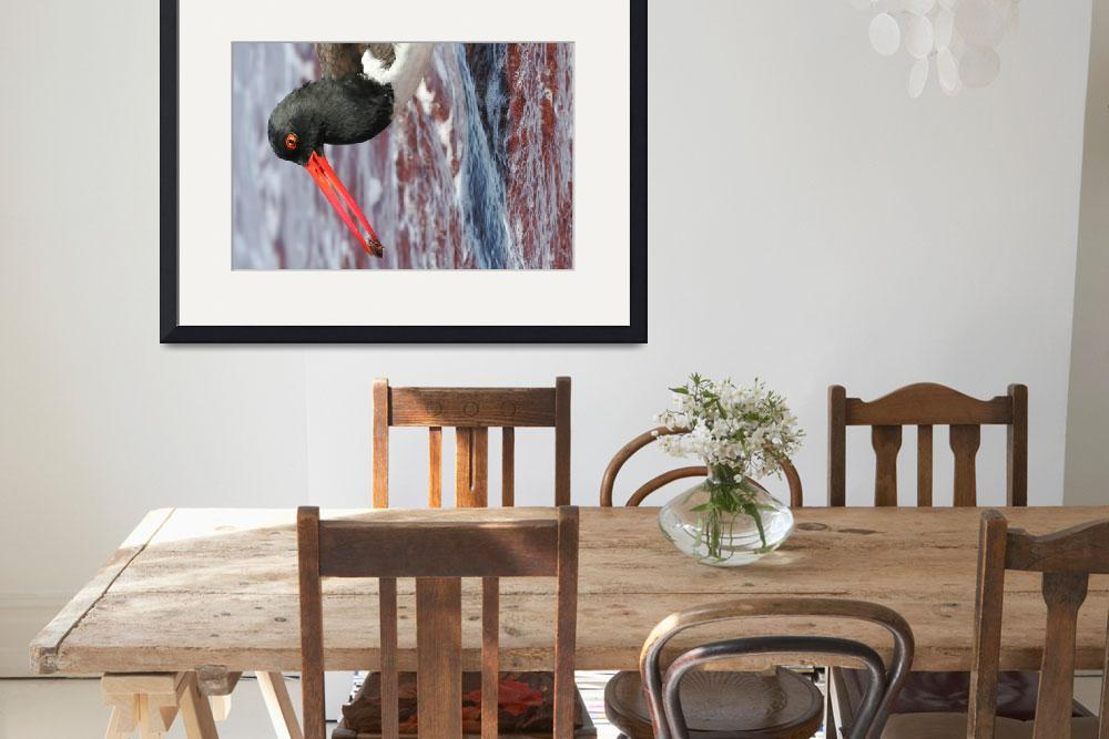 """""""American Oyster Catcher&quot  by DaniSweet"""