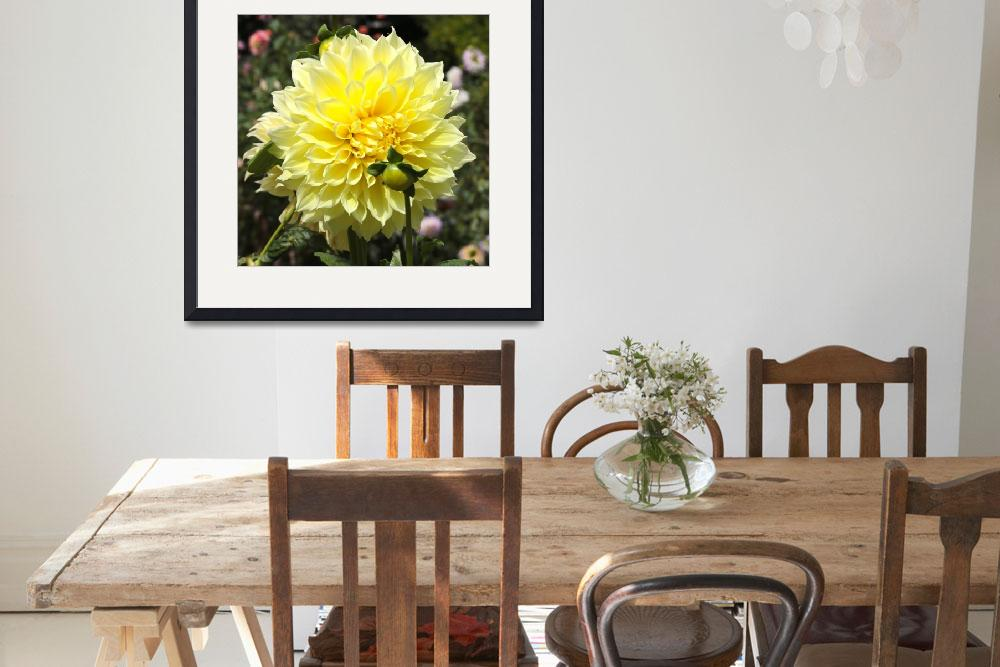"""Bright Yellow Dahlia&quot  (2014) by Groecar"