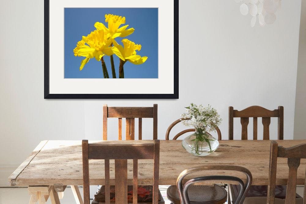 """Spring Art Prints Daffodils Flowers Canvas Framed""  (2010) by BasleeTroutman"
