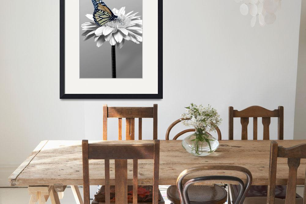 """""""Gerbera Daisy and Butterfly&quot  by roim"""