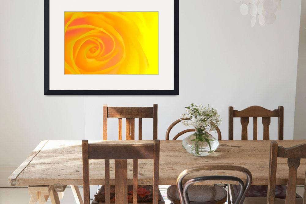 """""""Yellow Rose&quot  by neilcreek"""