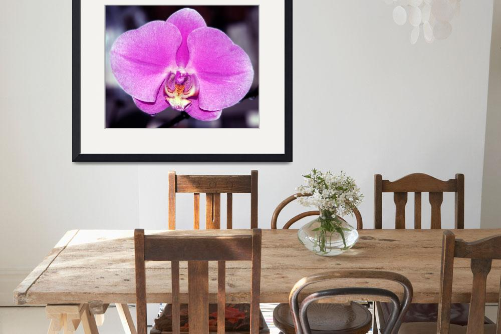 """""""Pink Orchid&quot  (2008) by LunarImage"""
