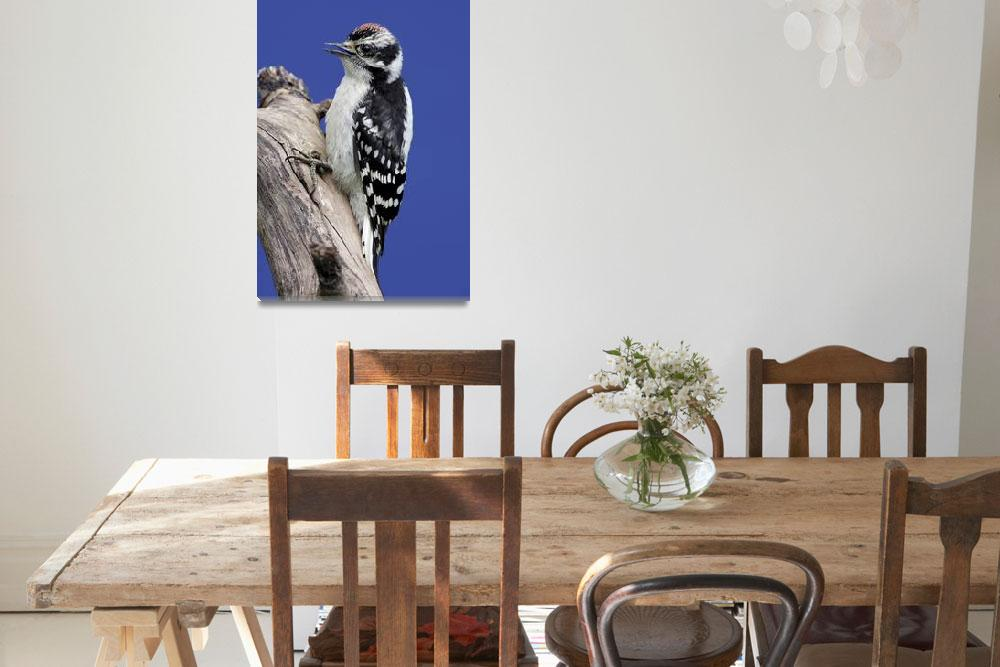 """""""Downy Woodpecker Photograph""""  by ArtLoversOnline"""