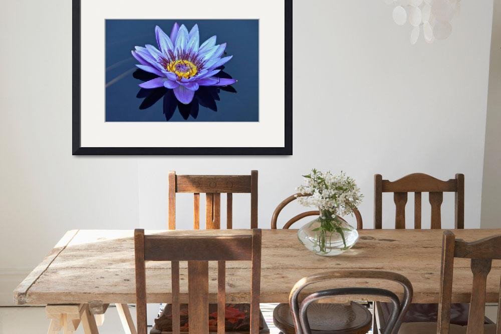 """""""Single Lavender Water Lily&quot  (2013) by LightHeart"""