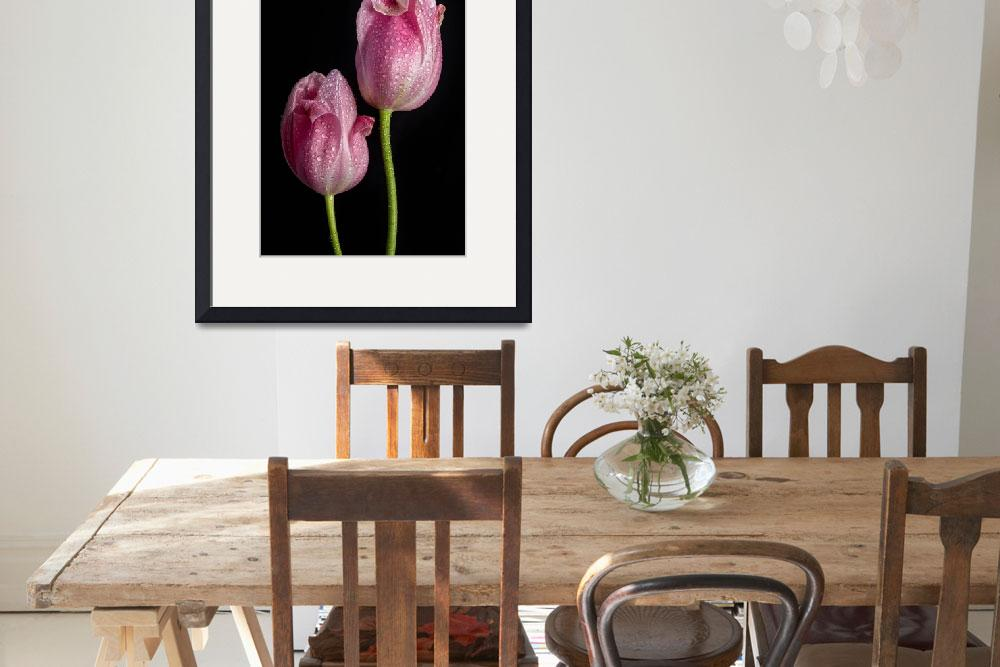 """""""Two Pink Tulips&quot  (2015) by lightningman"""