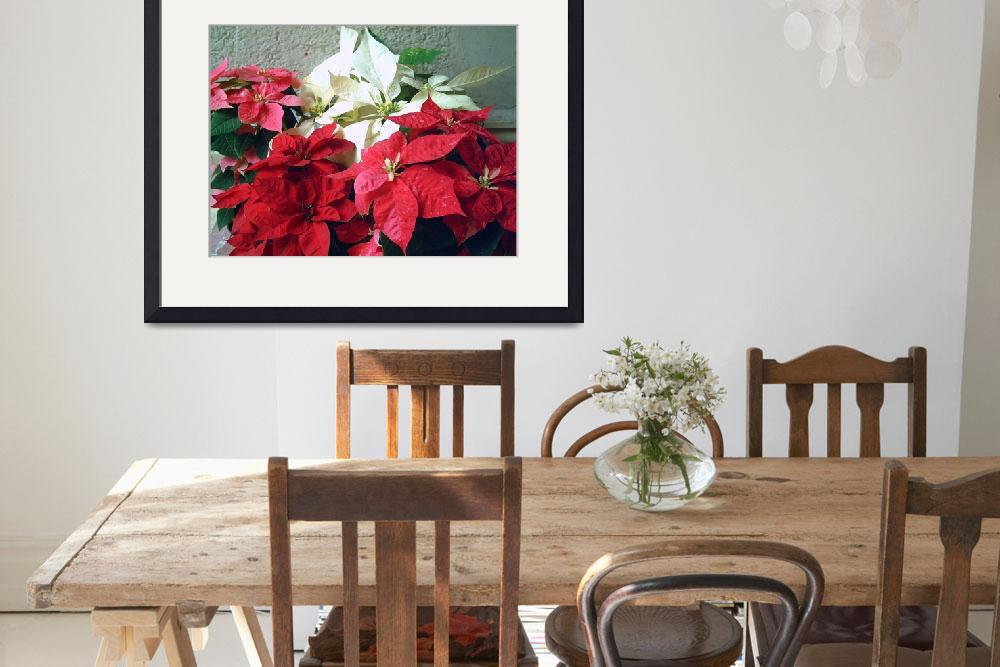 """Mixed color Poinsettias 3&quot  (2007) by ChristopherInMexico"