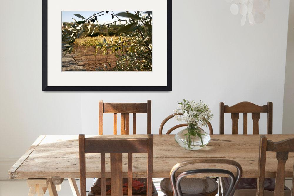 """""""WineCountry_OliveTree_22""""  (2009) by SBCountyImages"""
